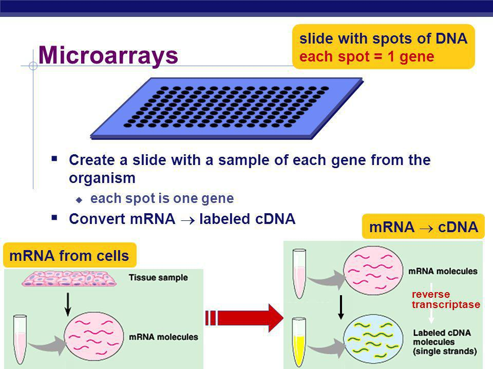 Microarrays slide with spots of DNA each spot = 1 gene