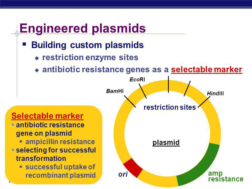 Engineered plasmids Building custom plasmids restriction enzyme sites