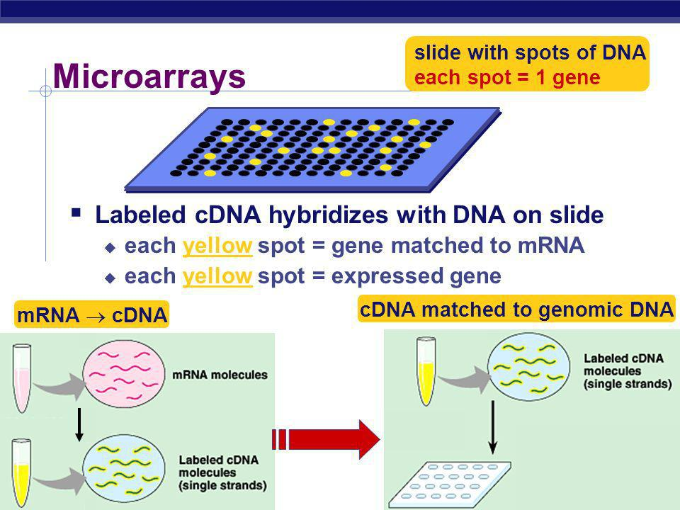 Microarrays Labeled cDNA hybridizes with DNA on slide
