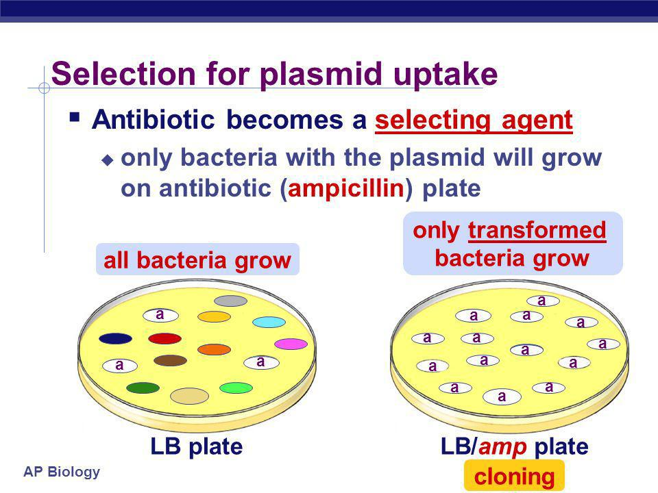 Selection for plasmid uptake