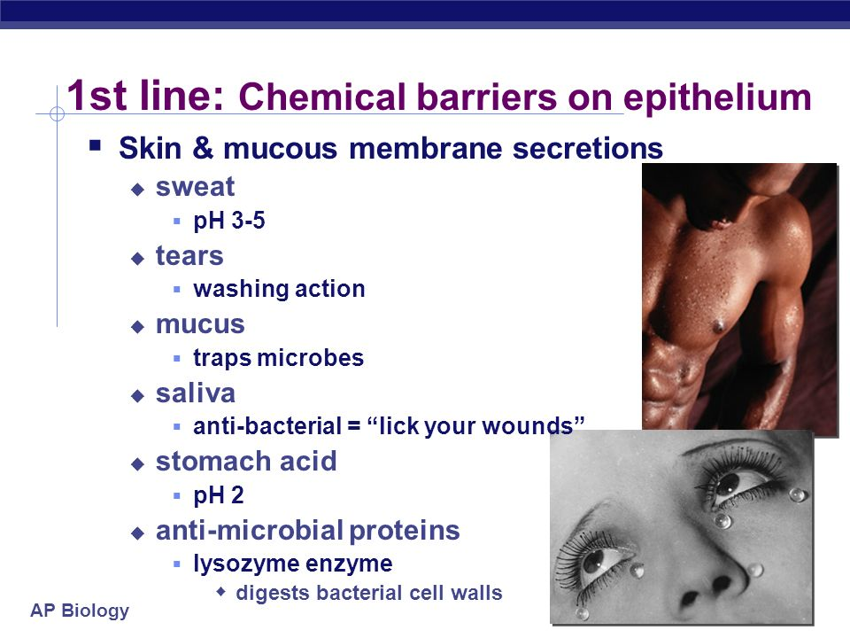 1st line: Chemical barriers on epithelium