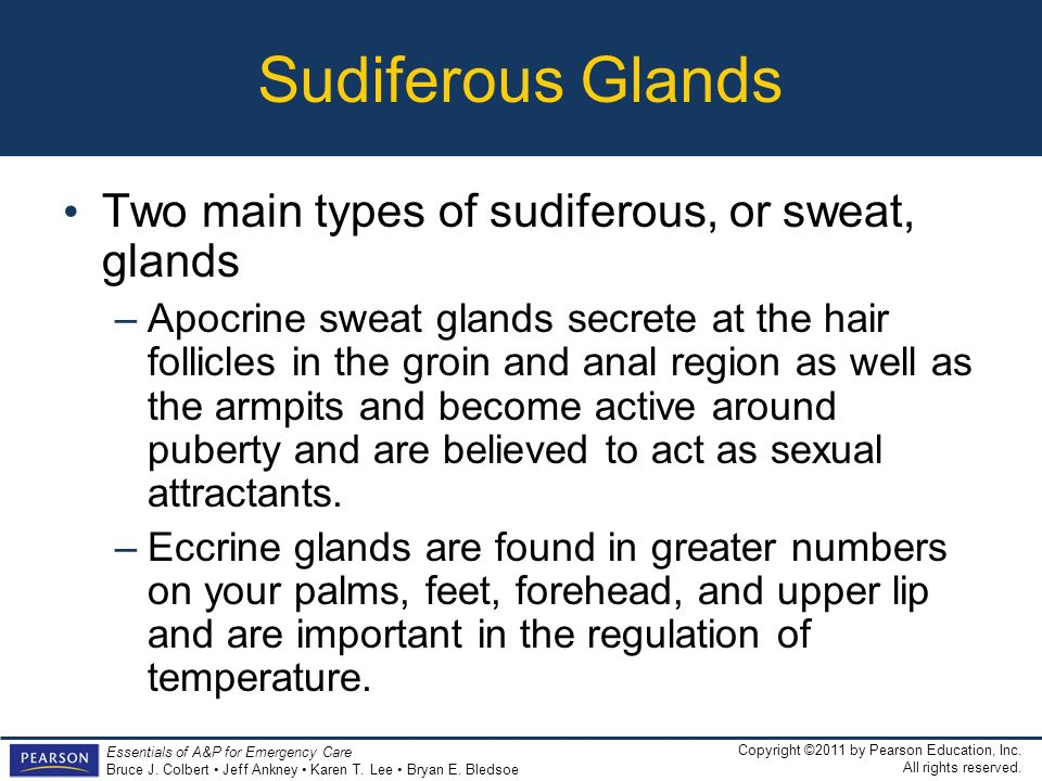 Sudiferous Glands Two main types of sudiferous, or sweat, glands