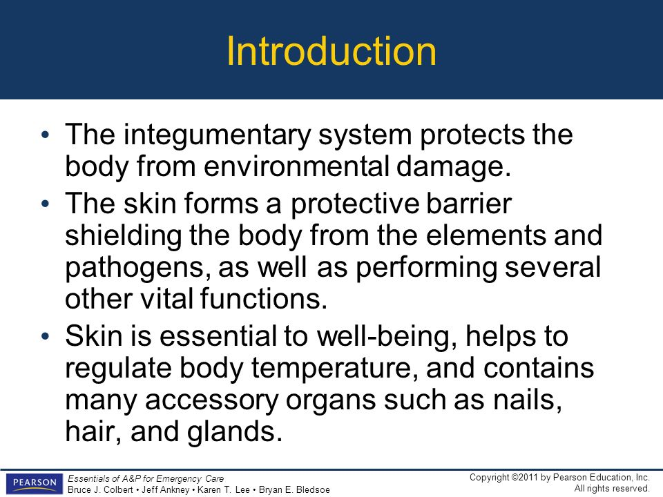 Introduction The integumentary system protects the body from environmental damage.
