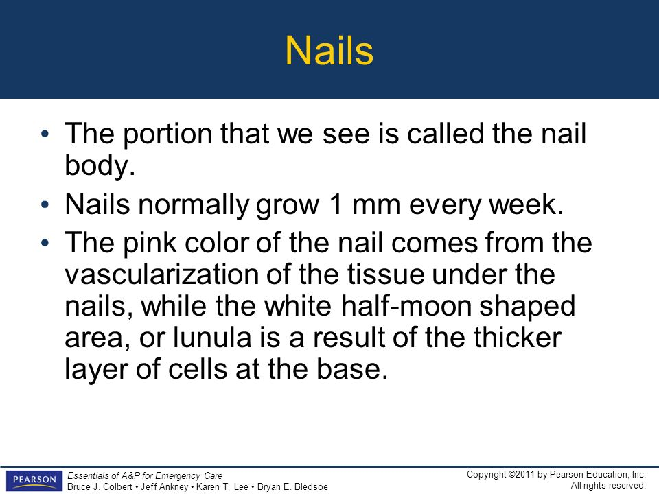 Nails The portion that we see is called the nail body.