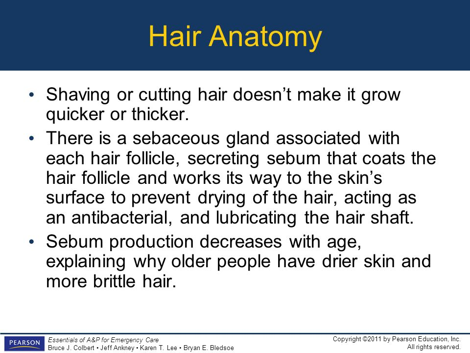 Hair Anatomy Shaving or cutting hair doesn't make it grow quicker or thicker.