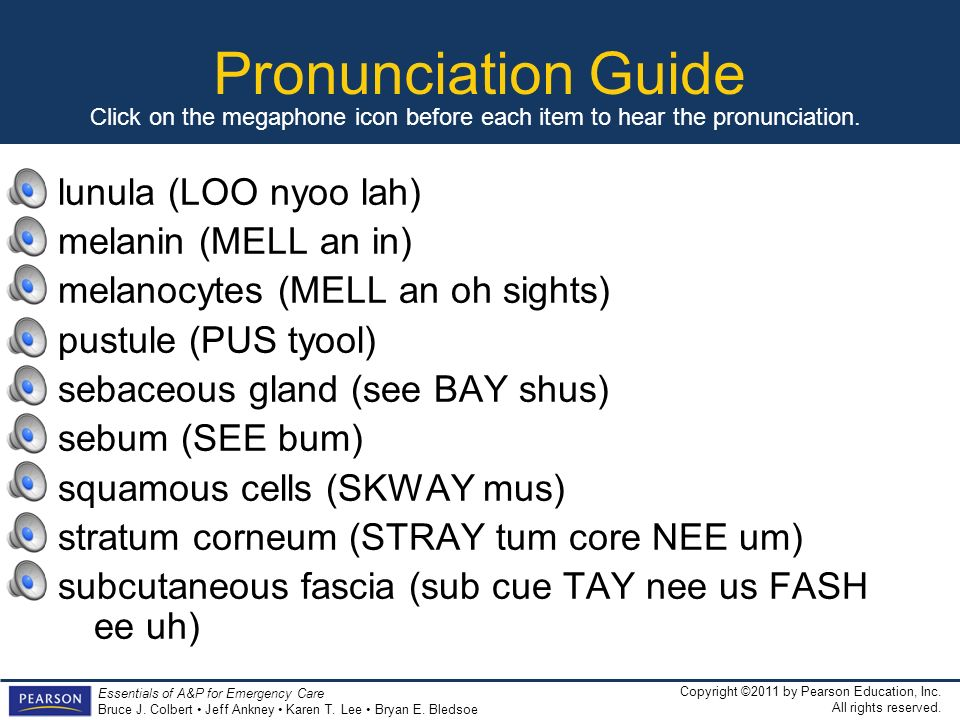 Pronunciation Guide lunula (LOO nyoo lah) melanin (MELL an in)