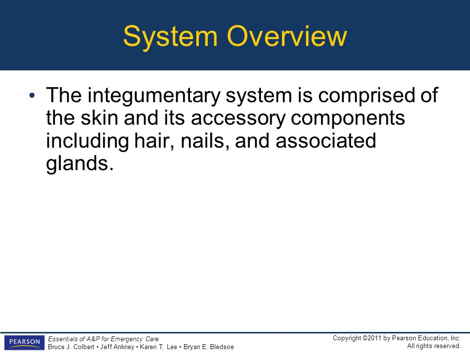 System Overview The integumentary system is comprised of the skin and its accessory components including hair, nails, and associated glands.