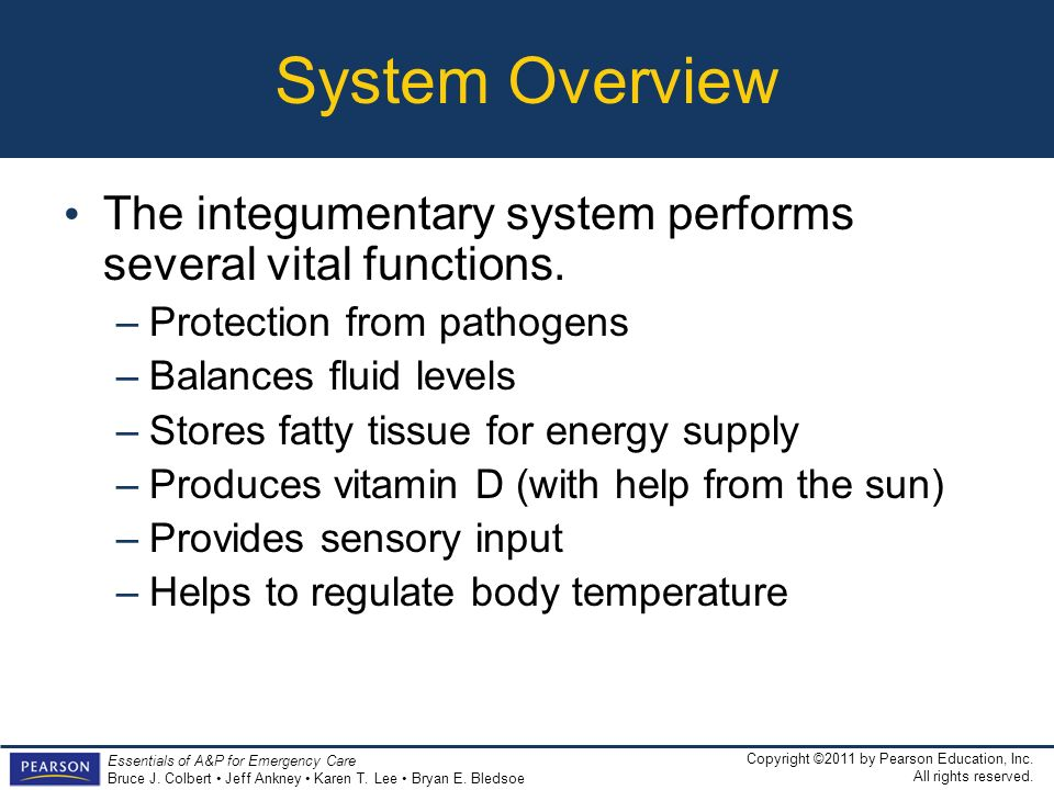 System Overview The integumentary system performs several vital functions. Protection from pathogens.