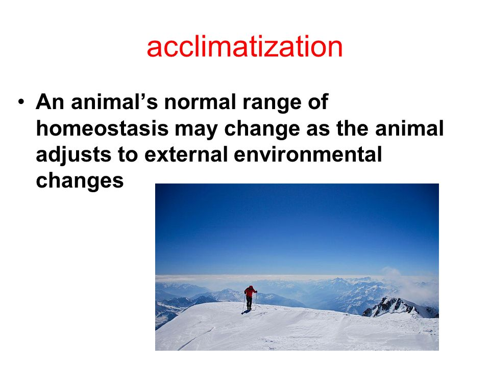 acclimatization An animal's normal range of homeostasis may change as the animal adjusts to external environmental changes.