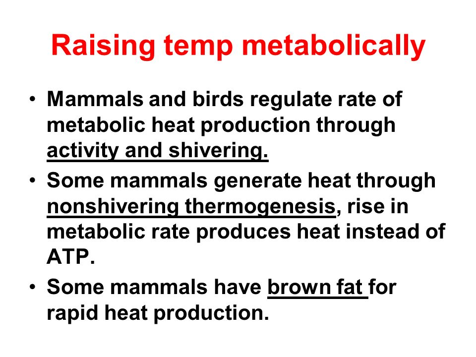 Raising temp metabolically
