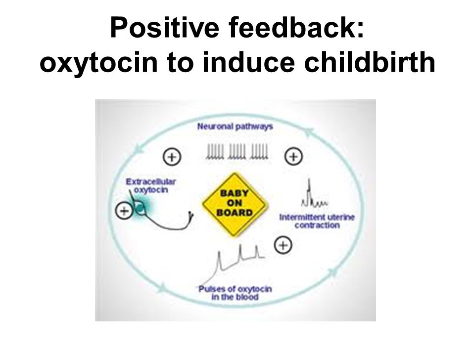 Positive feedback: oxytocin to induce childbirth