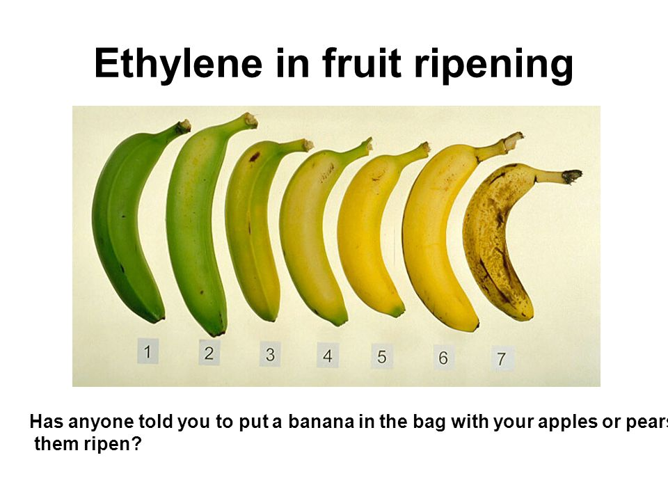 Ethylene in fruit ripening