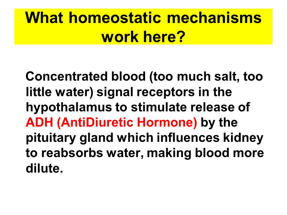 What homeostatic mechanisms work here