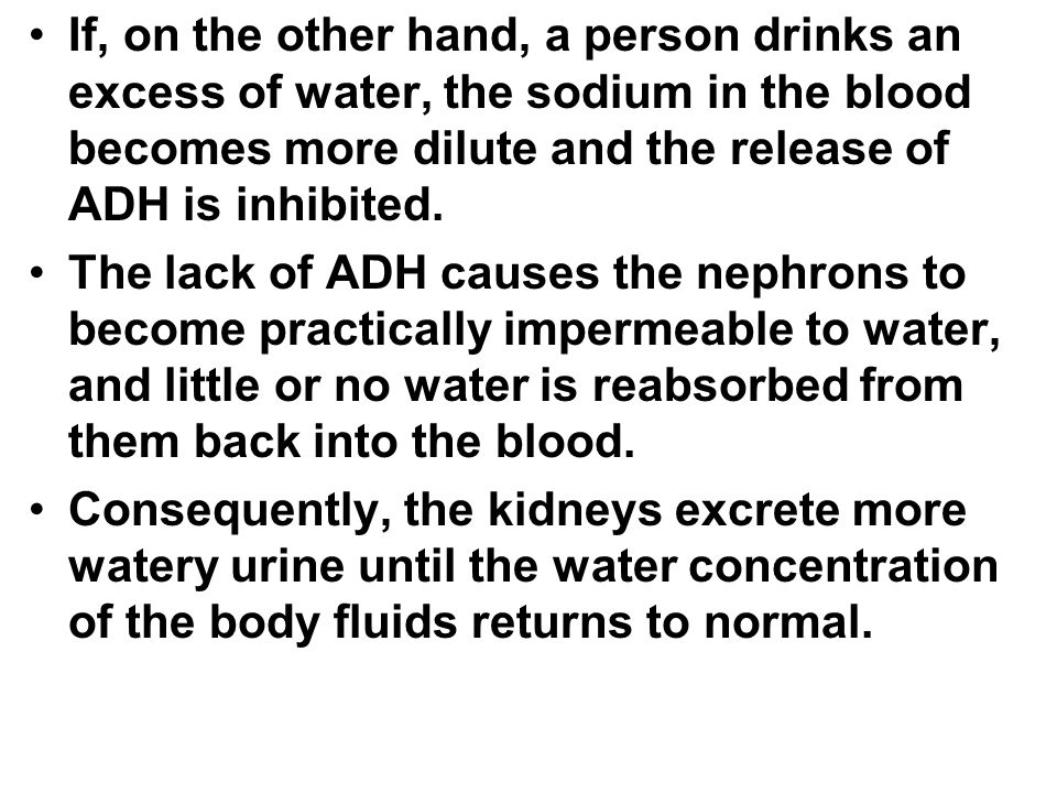 If, on the other hand, a person drinks an excess of water, the sodium in the blood becomes more dilute and the release of ADH is inhibited.