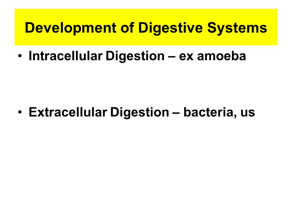 Development of Digestive Systems