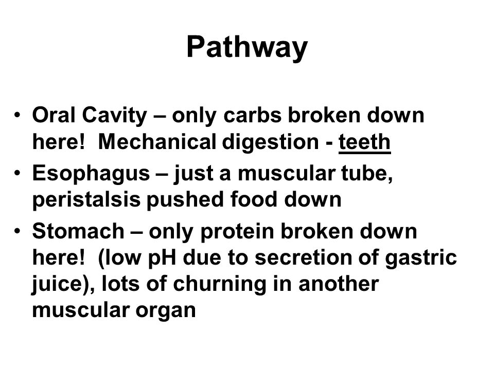 Pathway Oral Cavity – only carbs broken down here! Mechanical digestion - teeth. Esophagus – just a muscular tube, peristalsis pushed food down.