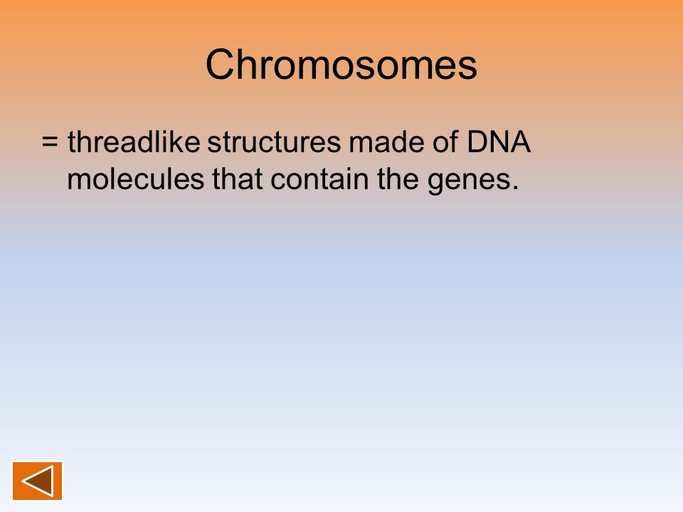 Chromosomes = threadlike structures made of DNA molecules that contain the genes.