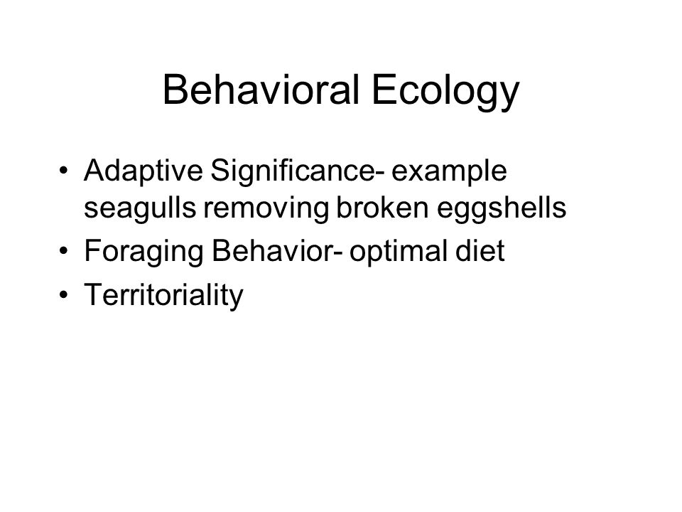 Behavioral Ecology Adaptive Significance- example seagulls removing broken eggshells. Foraging Behavior- optimal diet.