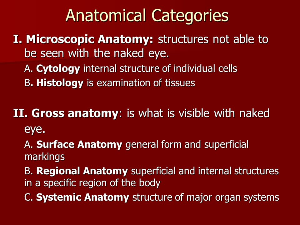 Anatomy & Physiology Human Structure & Human Function. - ppt video ...