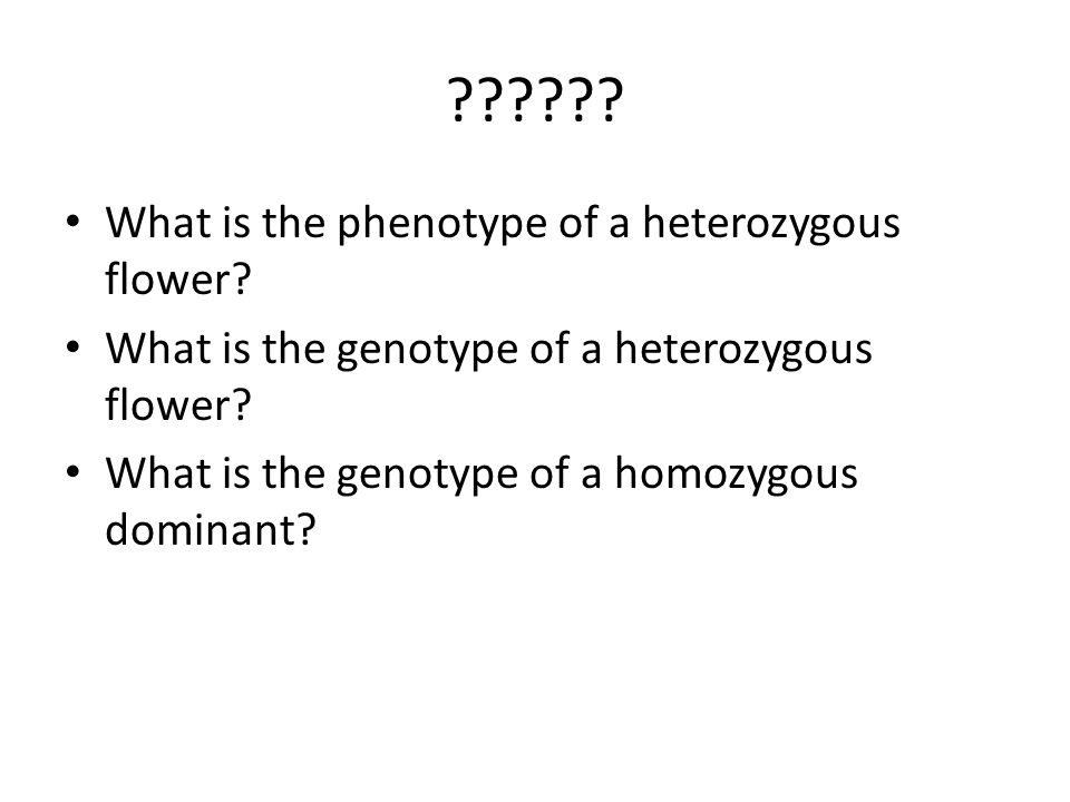 What is the phenotype of a heterozygous flower