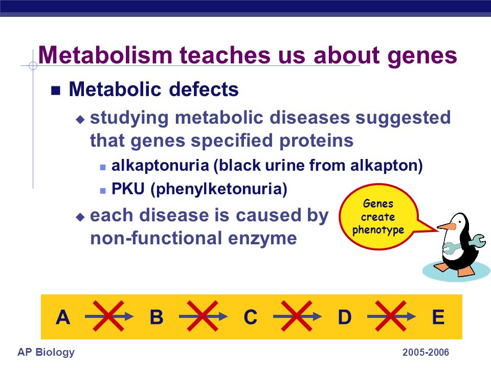 Metabolism teaches us about genes