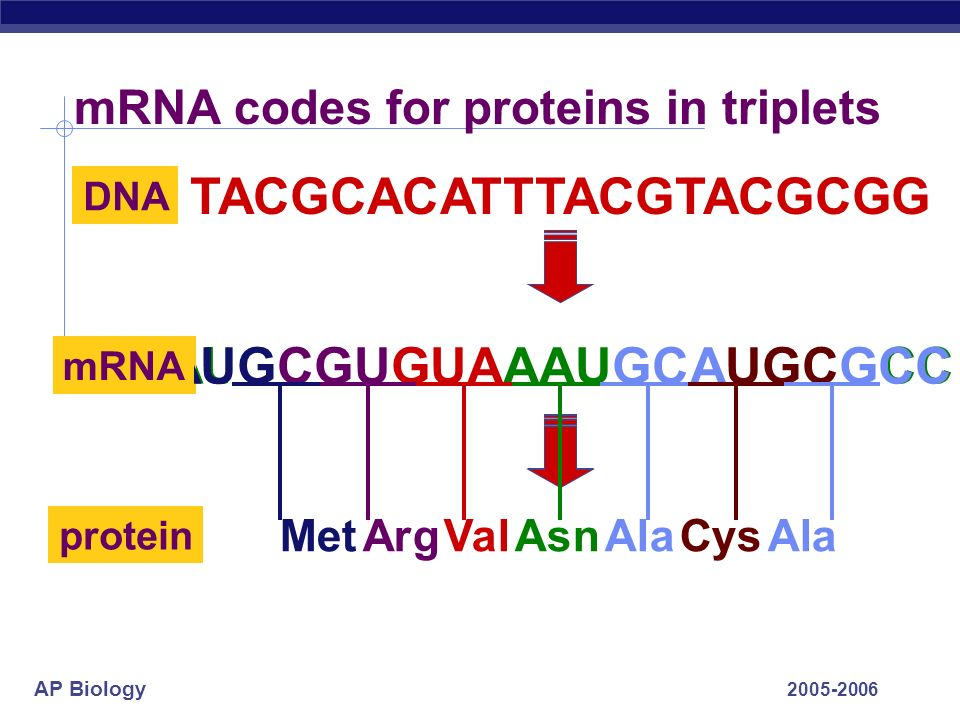 mRNA codes for proteins in triplets