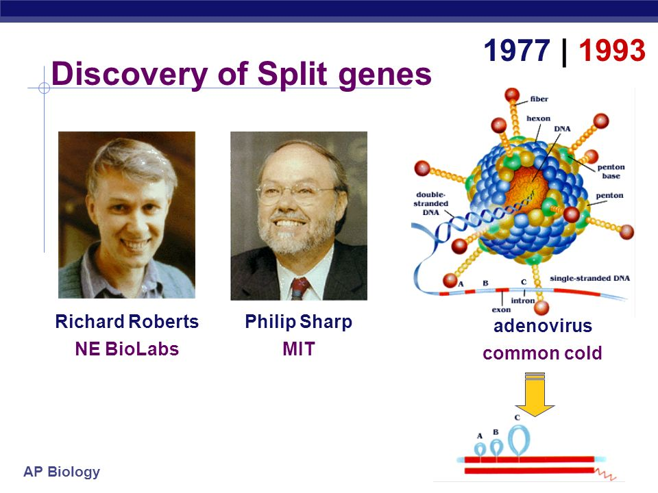 Discovery of Split genes