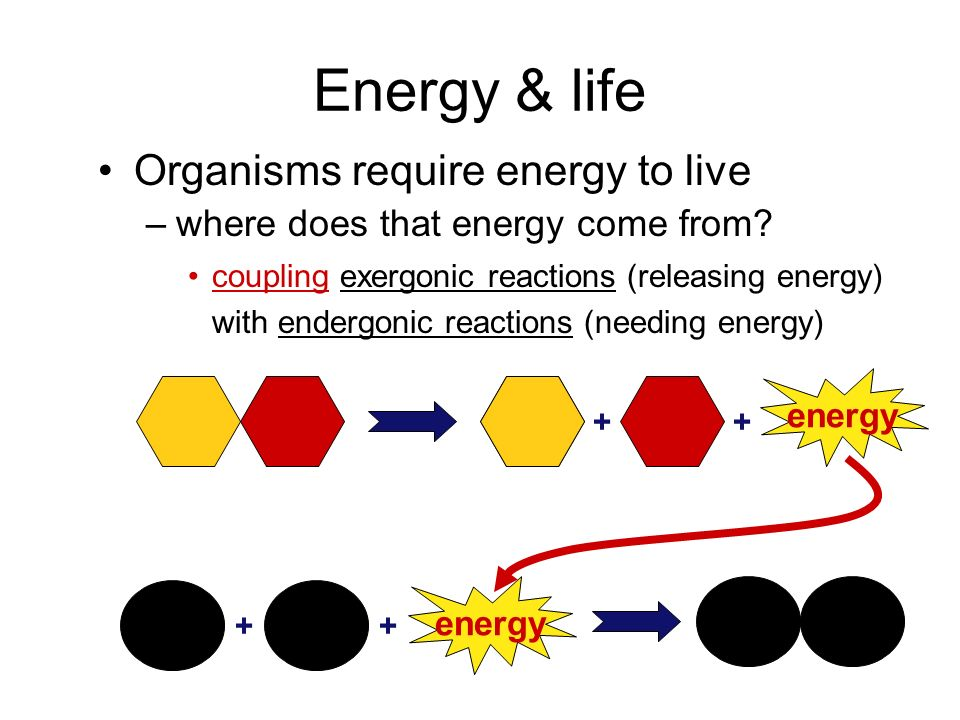 Energy & life Organisms require energy to live