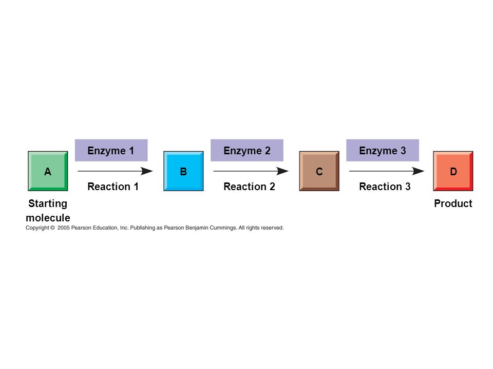 Enzyme 1 Enzyme 2 Enzyme 3 A B C D Reaction 1 Reaction 2 Reaction 3 Starting molecule Product