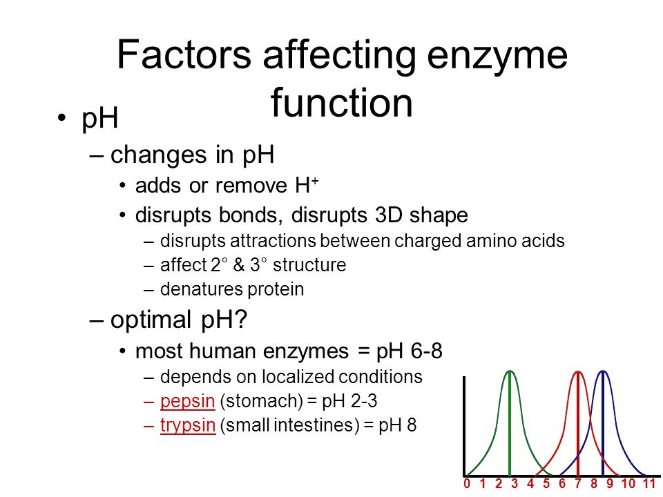 Factors affecting enzyme function