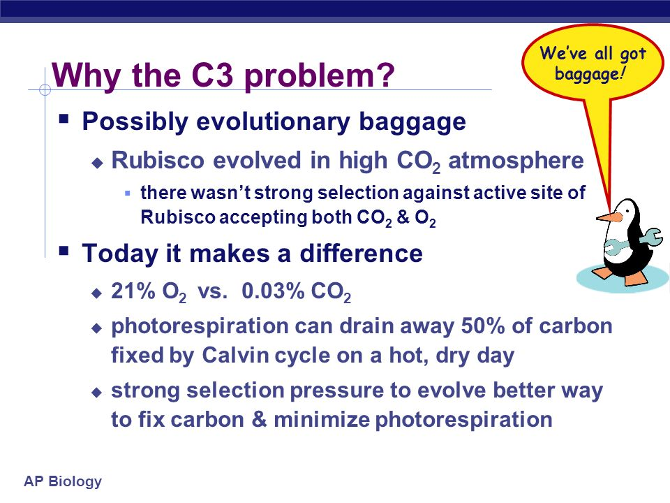 Why the C3 problem Possibly evolutionary baggage