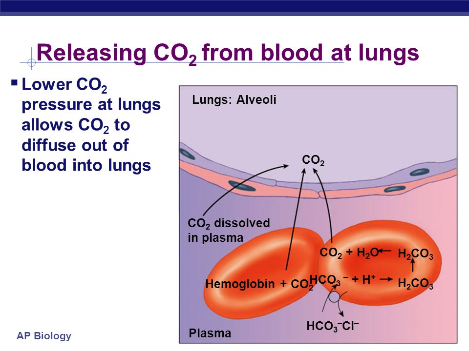 Releasing CO2 from blood at lungs