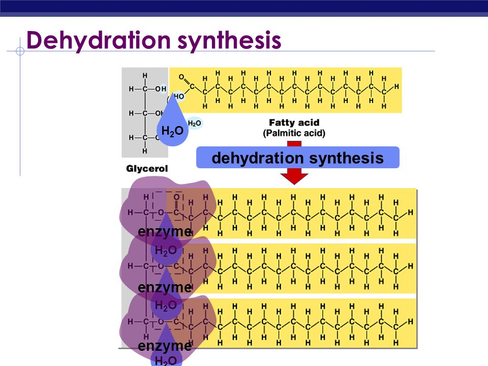 Dehydration synthesis