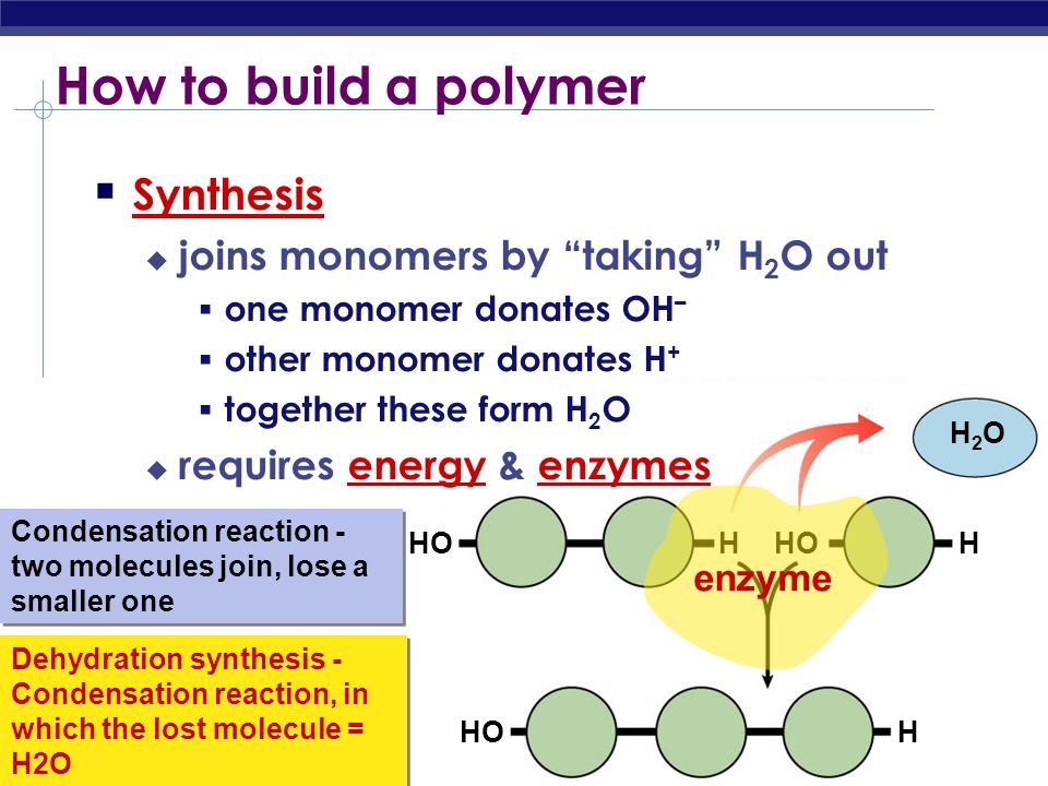 How to build a polymer Synthesis joins monomers by taking H2O out