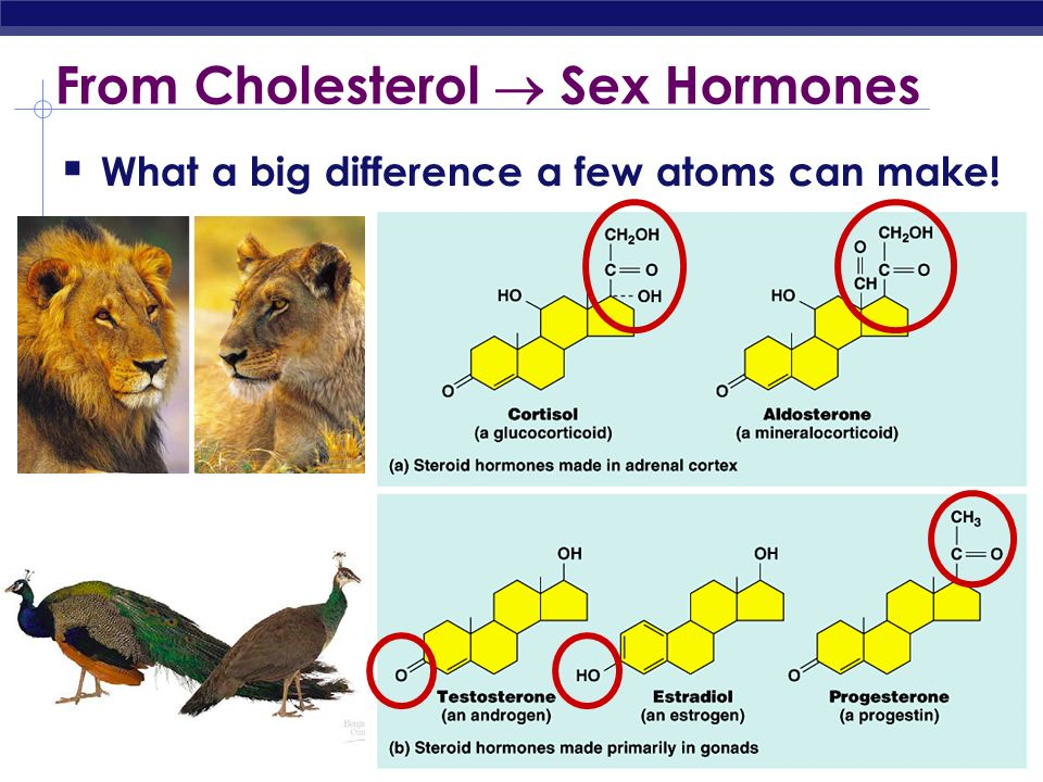 From Cholesterol  Sex Hormones