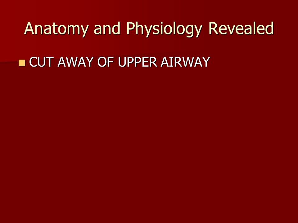 Pulmonary Anatomy and Physiology - ppt download