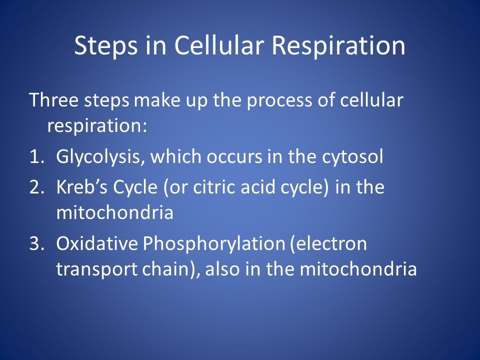 Steps in Cellular Respiration