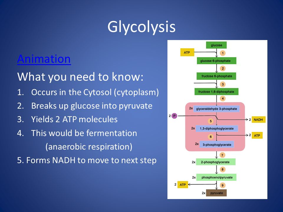 Glycolysis Animation What you need to know: