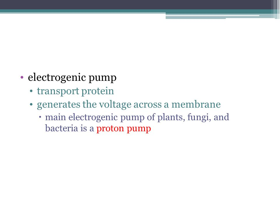 electrogenic pump transport protein