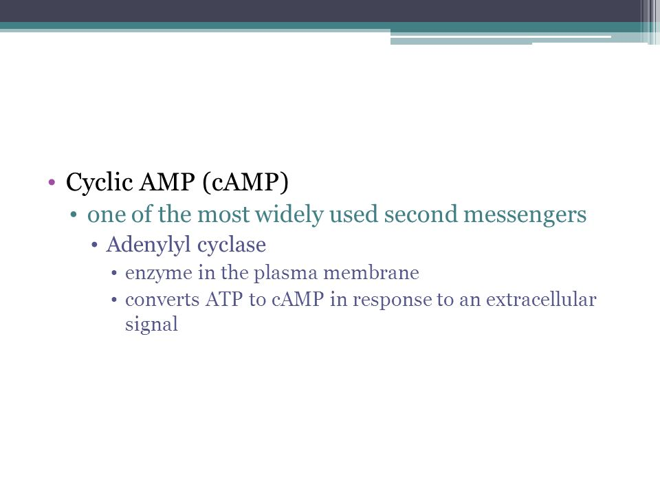 Cyclic AMP (cAMP) one of the most widely used second messengers