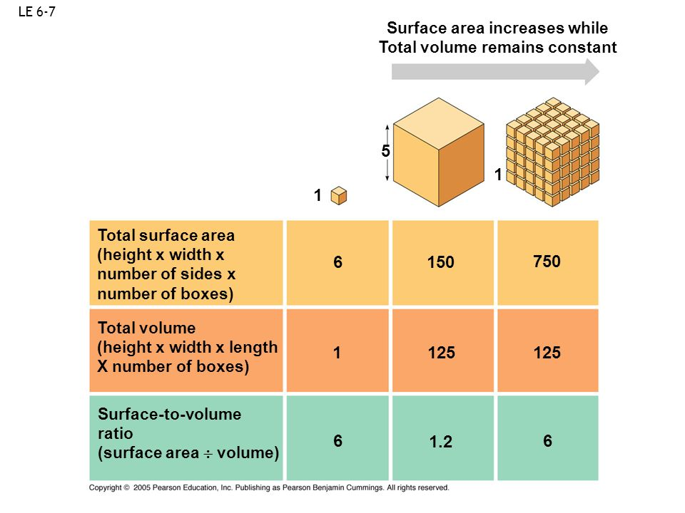 Surface area increases while Total volume remains constant