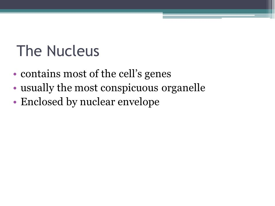 The Nucleus contains most of the cell's genes