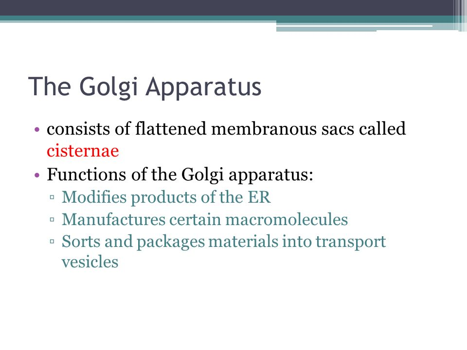 The Golgi Apparatus consists of flattened membranous sacs called cisternae. Functions of the Golgi apparatus: