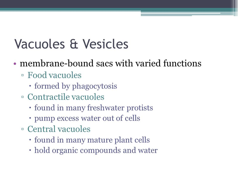 Vacuoles & Vesicles membrane-bound sacs with varied functions