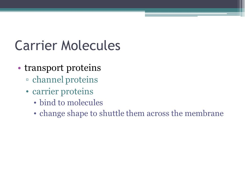 Carrier Molecules transport proteins channel proteins carrier proteins