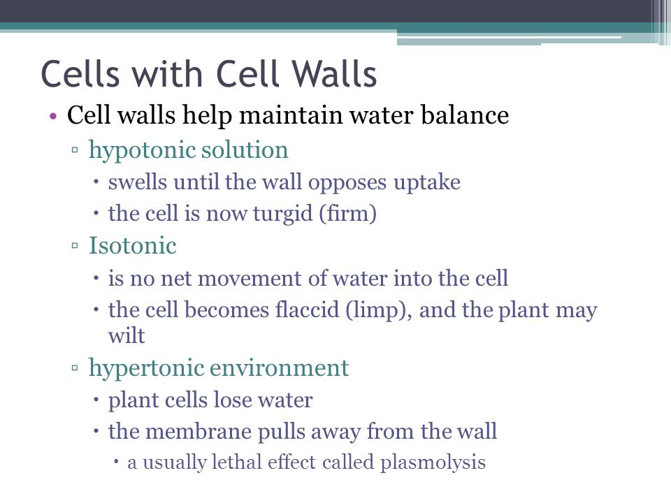 Cells with Cell Walls Cell walls help maintain water balance