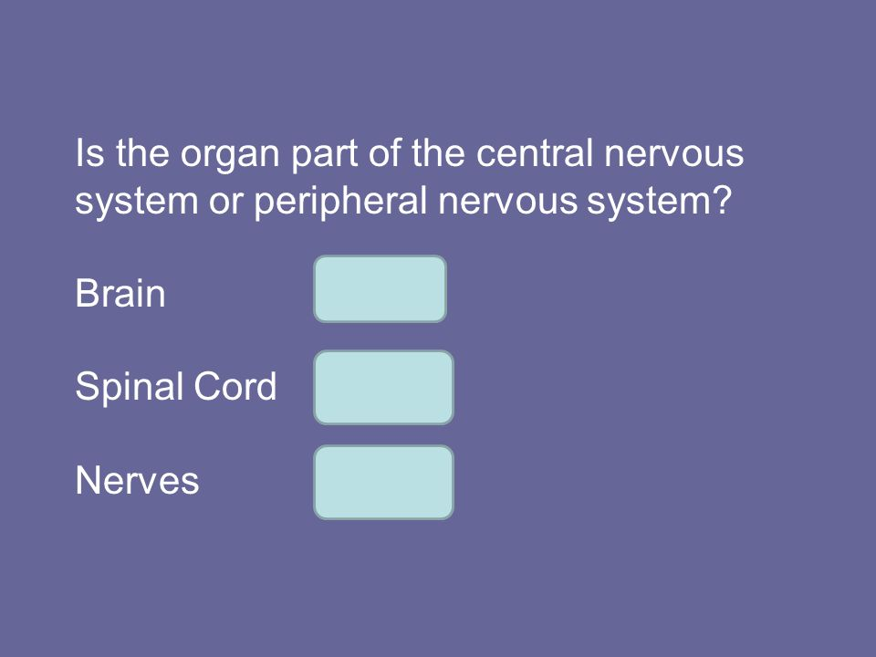 Is the organ part of the central nervous system or peripheral nervous system