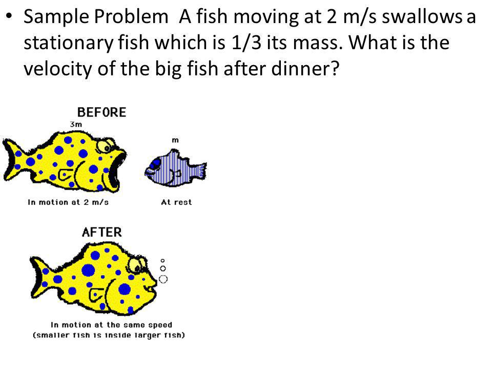 Sample Problem A fish moving at 2 m/s swallows a stationary fish which is 1/3 its mass.