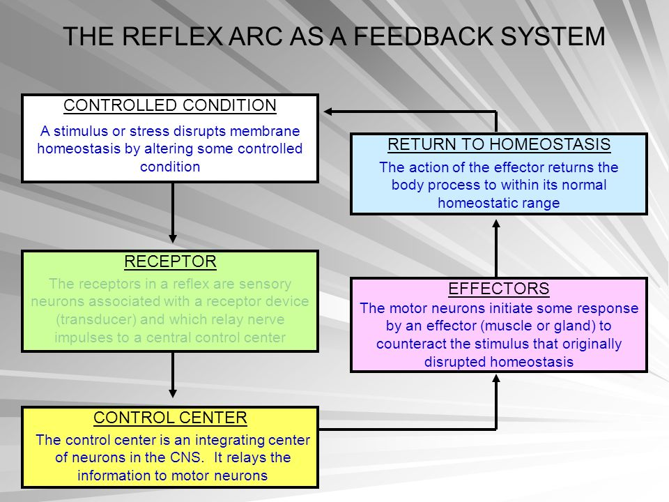 THE REFLEX ARC AS A FEEDBACK SYSTEM