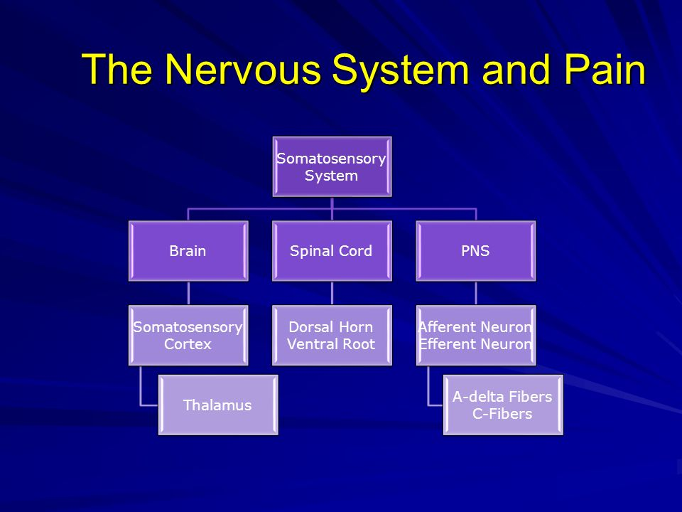 The Nervous System and Pain